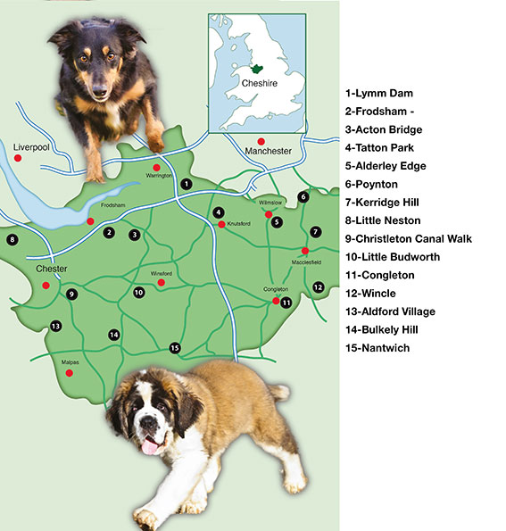 Places To Visit With Dog Walks Cheshire