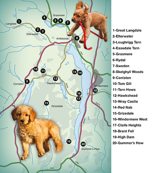 overall map of Countryside Dog Walks Walks in the Lake District South