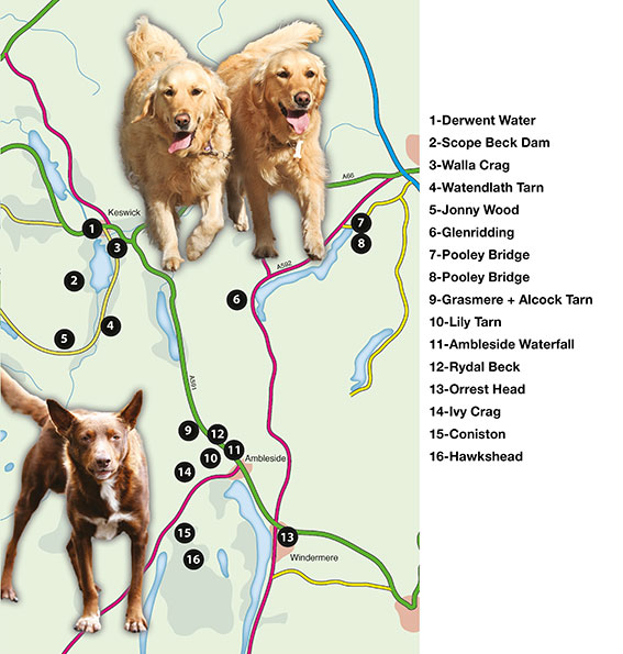 overall map of cheshire walks